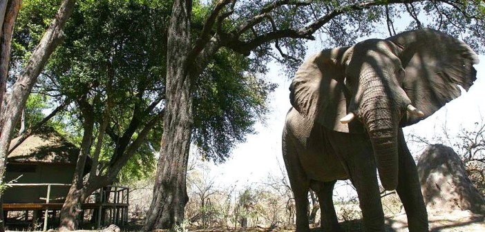 Visitor at the DumaTau Camp in Botswana