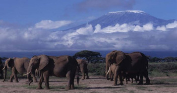 Views of the Mt. Kilimanjaro