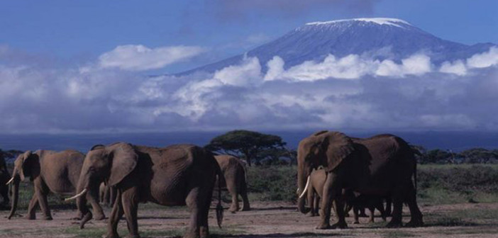Views of the Mt. Kilimanjaro