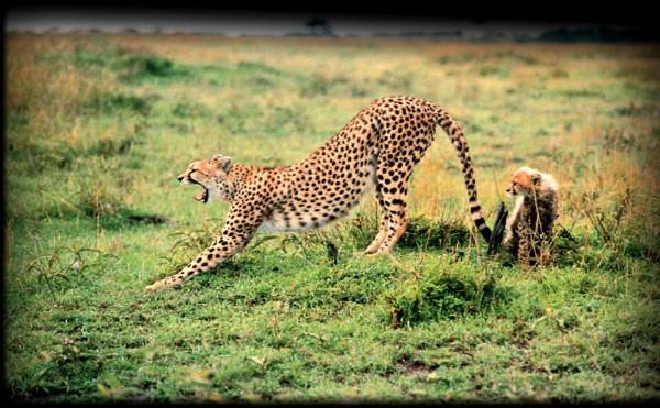 Foot safari in the Masai Mara