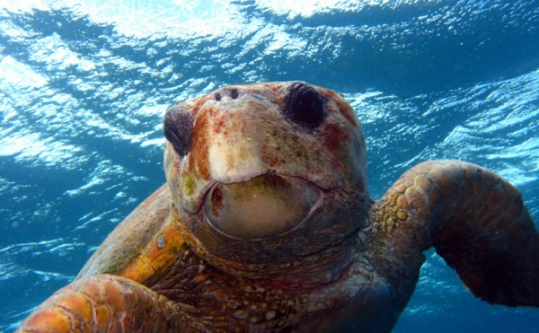 Shot of a turtle underwater