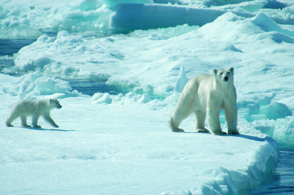 See the amazing wildlife of the Canadian High Arctic with Peregrine Adventures