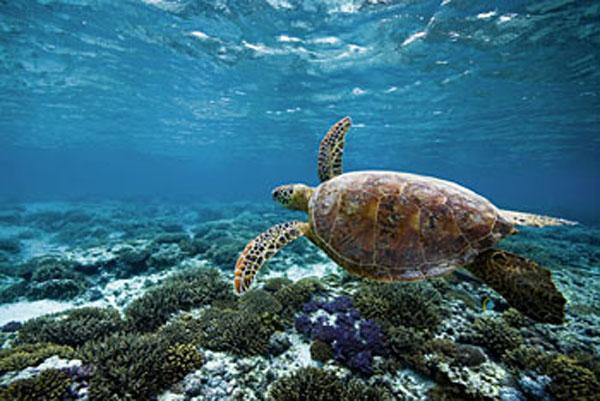 Marine Life at the Lady Elliot Island