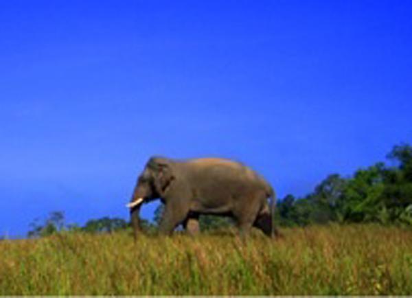Elephant Tracking