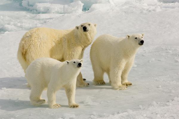Cruising the Svalbard Archipelago