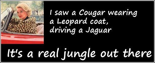 cougar-in-leopard-skin