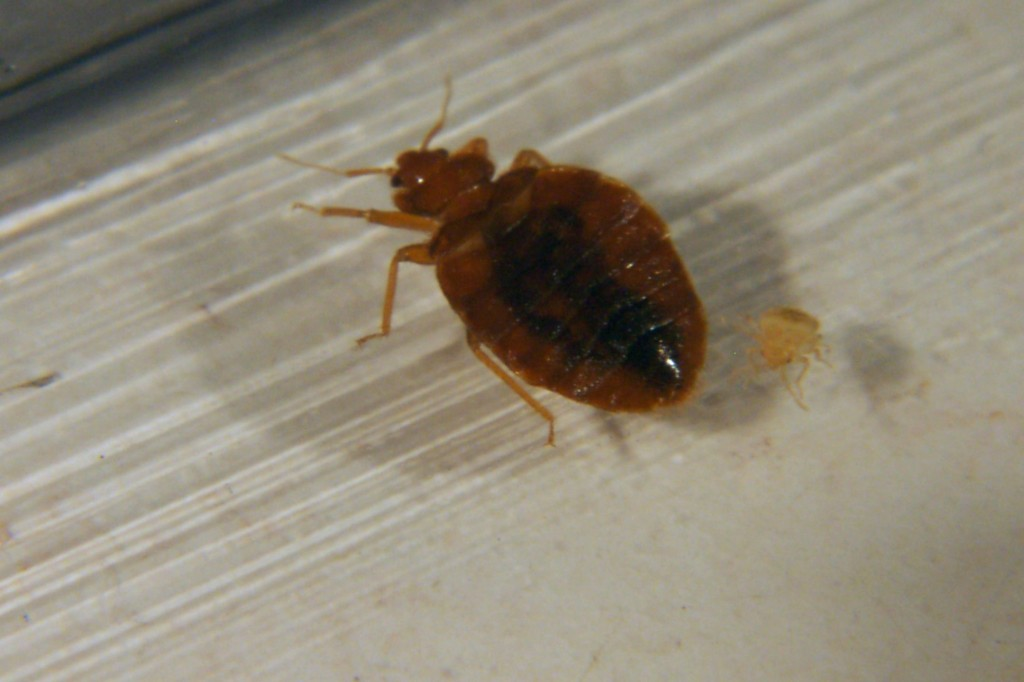 Bed bugs are the third highest concern for travellers