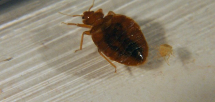 Don T Let The Bed Bugs Bite Oh But They Do