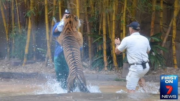 David Styles Australia Zoo handler mauled by tiger