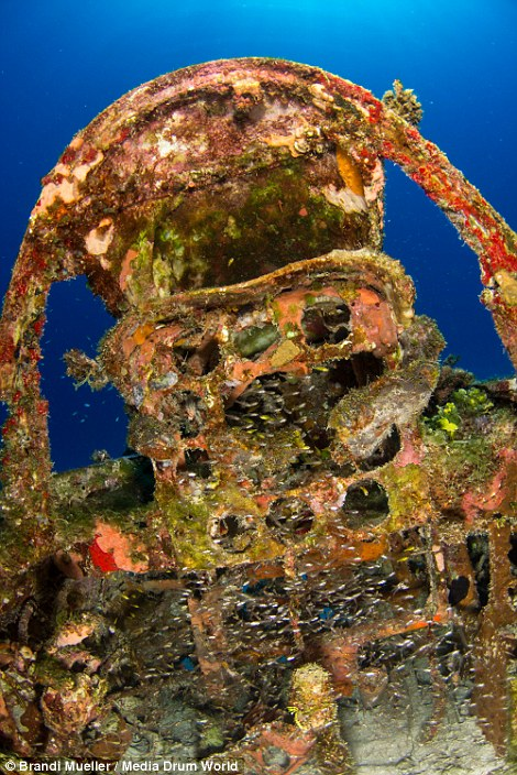 Wreckage of lost WWII aircrafts now homes to fish and other ocean dwellers