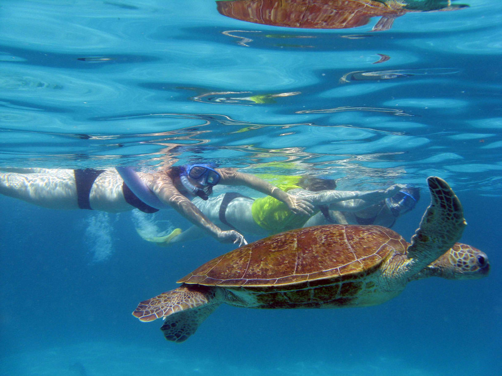 Snorkelers at Ningaloo Reef