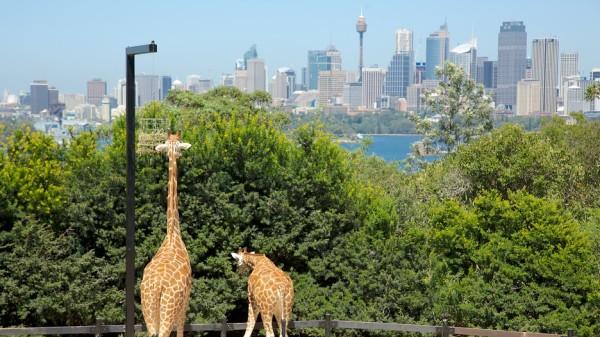 Taronga-Zoo-vivid-sydney-2016