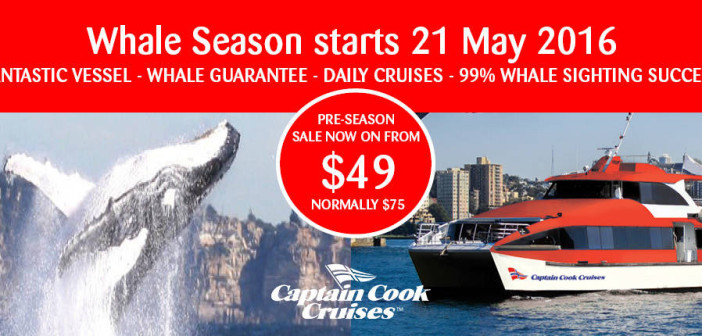 captain-cook-cruises-whale-watching