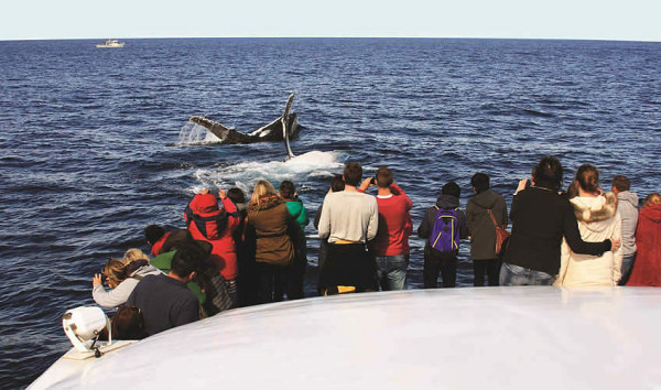 captain-cook-cruises-whale-watching-tours