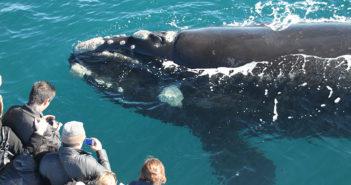 perth-humpback-whale-watching