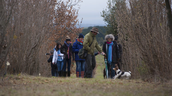 Canberra to celebrate the truffle season with lots of events