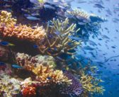 Healthy coral colonies discovered in the Great Barrier Reef